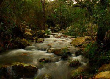 Parque Natural Los Alcornocales (Tarifa)